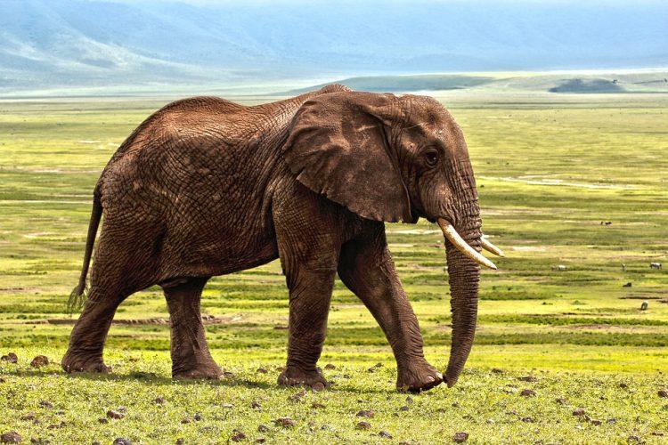 Décryptage de meilleures destinations touristiques en Afrique