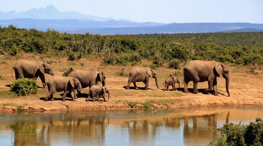 Quelques précautions pour voyager en Afrique du Sud